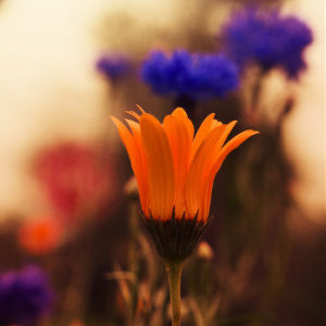 foto di fiori colorati